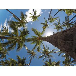 フリー写真, 風景, 樹木, 椰子(ヤシ), 青空, 南国, リゾート, 夏