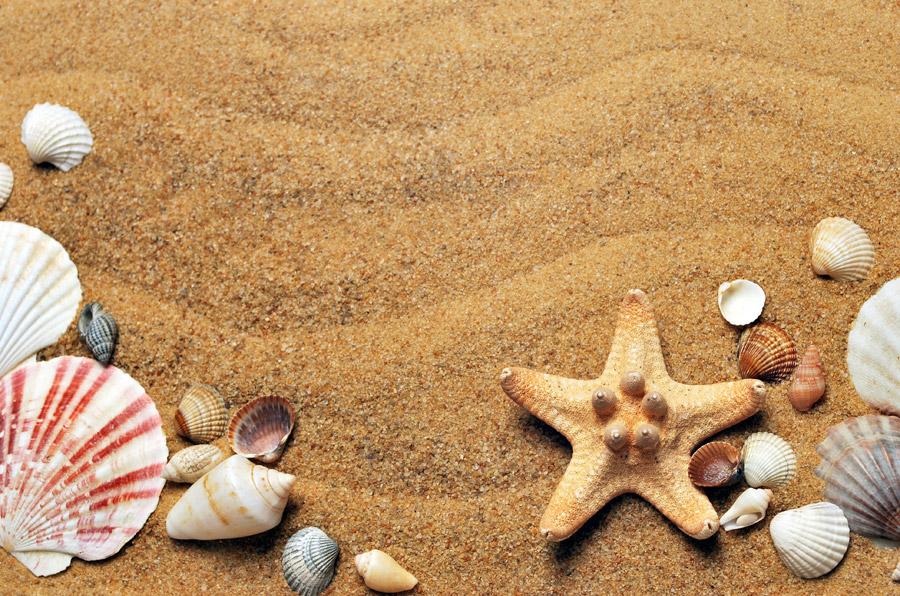フリー写真 砂の上の貝殻とヒトデの夏の背景