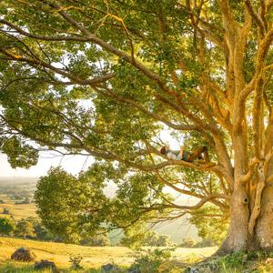 フリー写真, 風景, 田舎, 樹木, 人と風景, 男性, 外国人男性, 寝転ぶ, 仰向け, 寝る(寝顔)