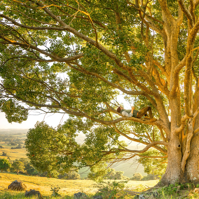 フリー写真 木の上で眠る外国人男性