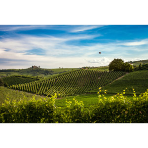フリー写真, 風景, 田舎, 果樹園, 青空, 熱気球