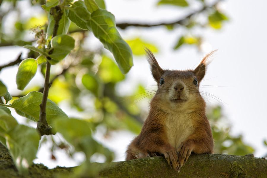 フリー写真 木の枝にいるリス