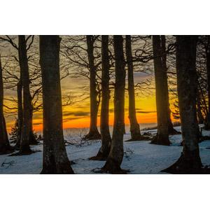 フリー写真, 風景, 自然, 森林, 樹木, 夕暮れ(夕方), 夕焼け, 雪, 冬