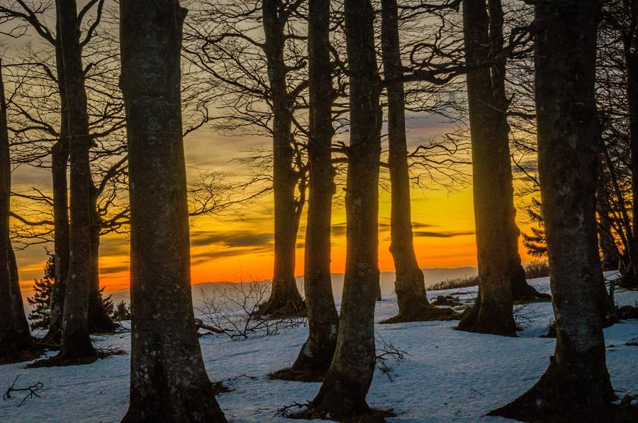 フリー写真 夕焼けと森の木々の風景