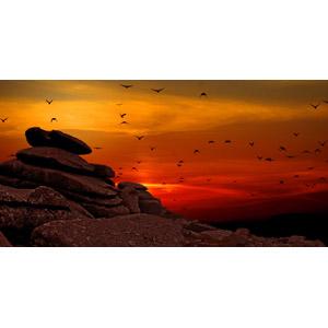 フリー写真, 風景, 自然, 岩, 夕暮れ(夕方), 夕焼け, 鳥(トリ), 群れ