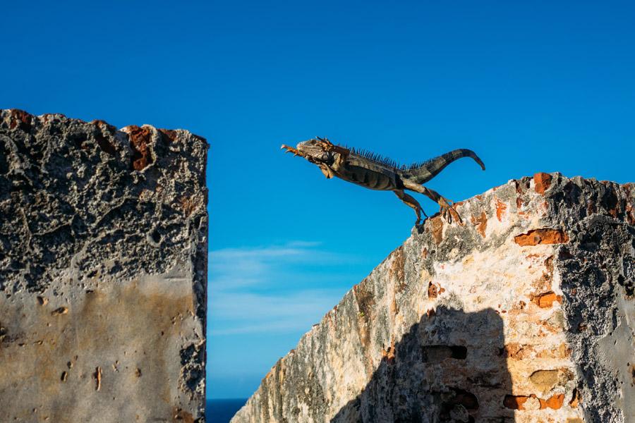 フリー写真 ジャンプするイグアナ