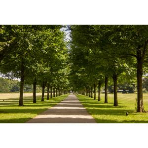 フリー写真, 風景, 並木道, 樹木, イギリスの風景, ウェールズ