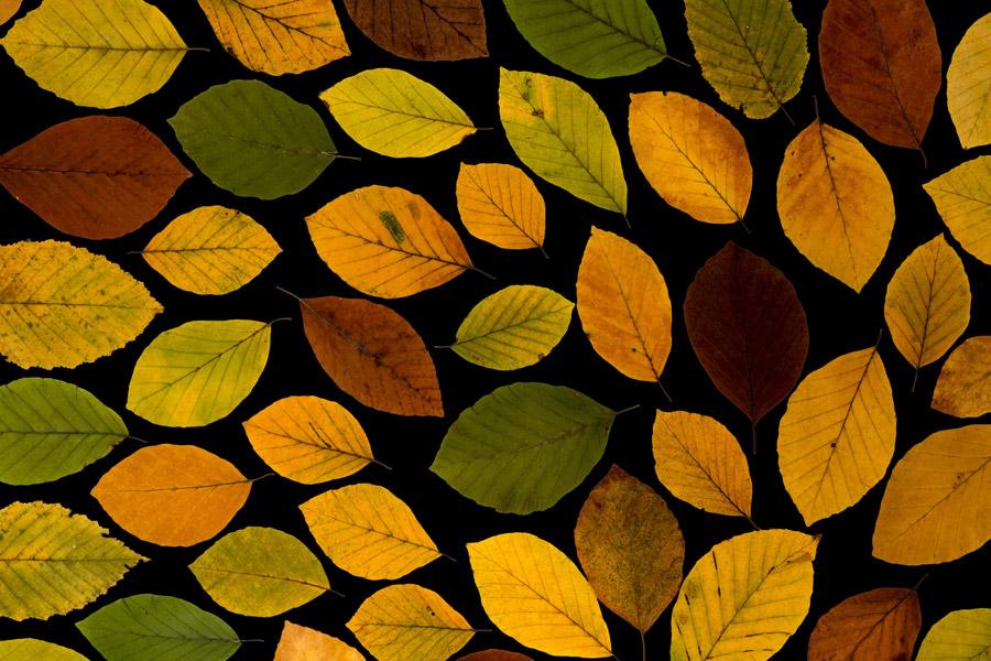 フリー写真 並べた落ち葉の背景