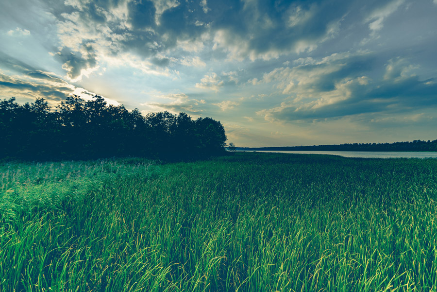 フリー写真 川と草むらの風景