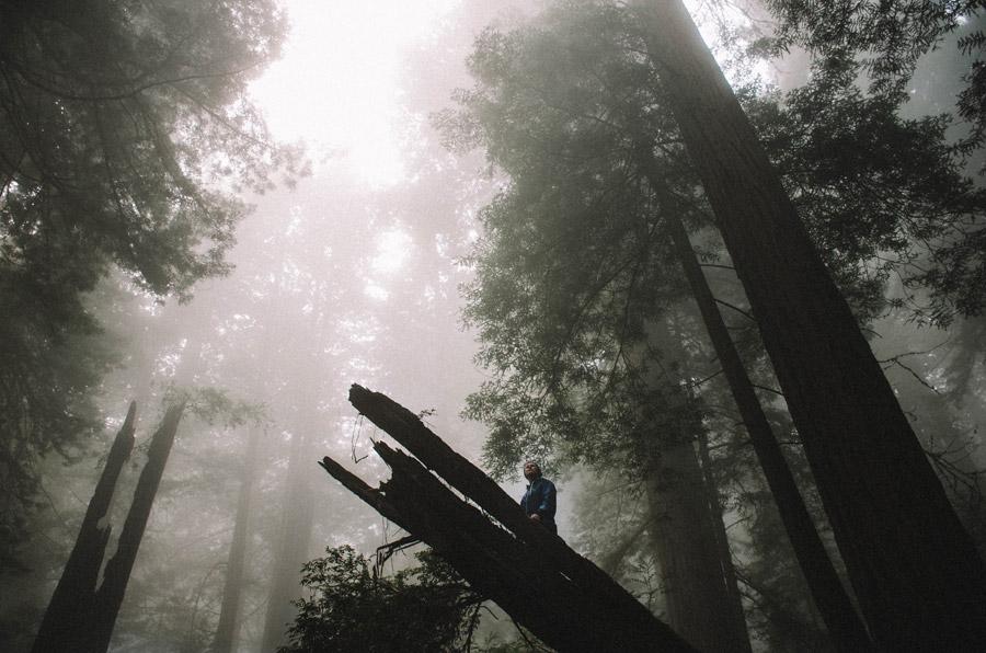 フリー写真 霧のかかる森と倒木の上に立つ人物