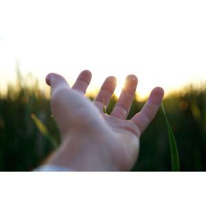 フリー写真, 人体, 手, 手を伸ばす, 畑, 太陽光(日光)