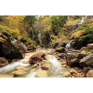 フリー写真, 風景, 自然, 森林, 紅葉(黄葉), 秋, 河川, 滝, 渓流, 岩