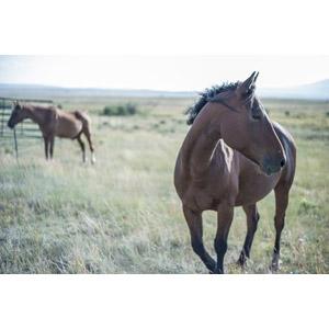 フリー写真, 動物, 哺乳類, 馬(ウマ), 牧場, 牧草地