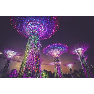 フリー写真, 風景, オブジェ, 夜景, 夜, ガーデンズ・バイ・ザ・ベイ, シンガポール