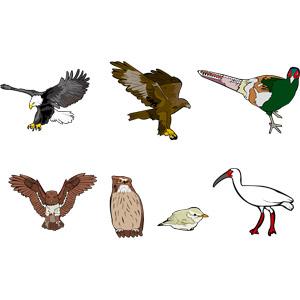 フリーイラスト, ベクター画像, AI, 動物, 鳥類, 鳥(トリ), 猛禽類, 鷲(ワシ), 鷹(タカ), 白頭鷲(ハクトウワシ), 雉(キジ), 梟(フクロウ), 鶯(ウグイス), 朱鷺(トキ)