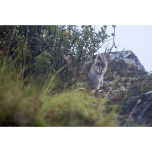 フリー写真, 動物, 哺乳類, 栗鼠(リス), 驚く(動物), 口を開ける(動物), 悲鳴を上げる