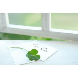 フリー写真, 植物, 雑草, クローバー(シロツメクサ), 四つ葉のクローバー, メッセージカード, プレゼント, 窓辺