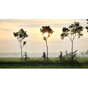 フリー写真, 人物, 人と乗り物, 自転車, 田舎, 水田(田んぼ), 朝日, 霧(霞), ノンラー, ベトナムの風景, 三人