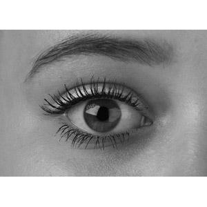 フリー写真, 人体, 目(眼), モノクロ, まつ毛, 眉毛