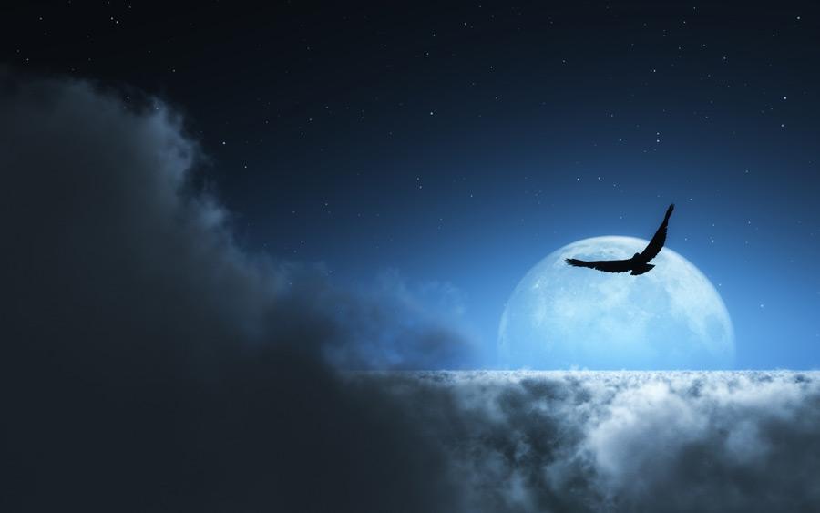 フリー写真 雲海と月と羽ばたく鳥の風景