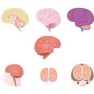 フリーイラスト, ベクター画像, AI, 人体, 器官(臓器), 脳