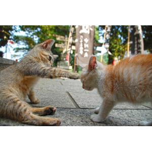 フリー写真, 動物, 哺乳類, 猫(ネコ), 子猫, 子供(動物), 猫パンチ, 目を閉じる(動物)