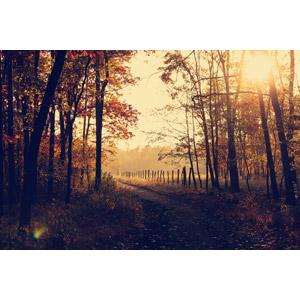 フリー写真, 風景, 田舎, 小道, 紅葉(黄葉), 秋, 並木道, 柵(フェンス), 太陽光(日光), ポーランドの風景