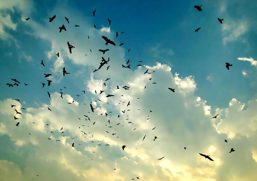 フリー写真 夕空と鳥の群れ