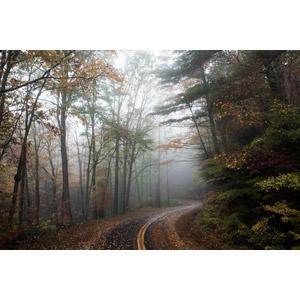 フリー写真, 風景, 道路, 森林, 樹木, 霧(霞), ノースカロライナ州, アメリカの風景