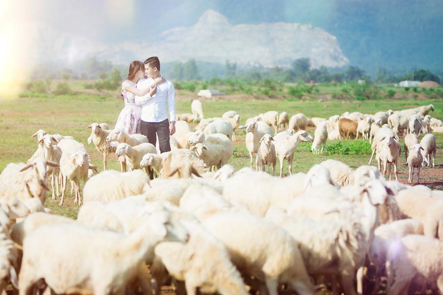 フリー写真 羊の群れとカップル