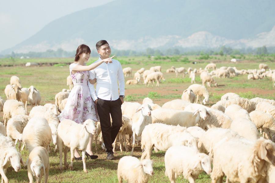 フリー写真 羊の群れと指差すカップル