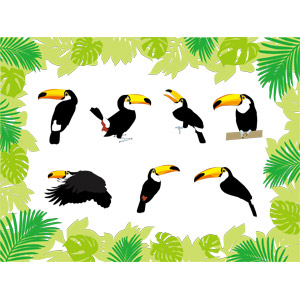 フリーイラスト, ベクター画像, AI, 動物, 鳥類, 鳥(トリ), オオハシ, オニオオハシ