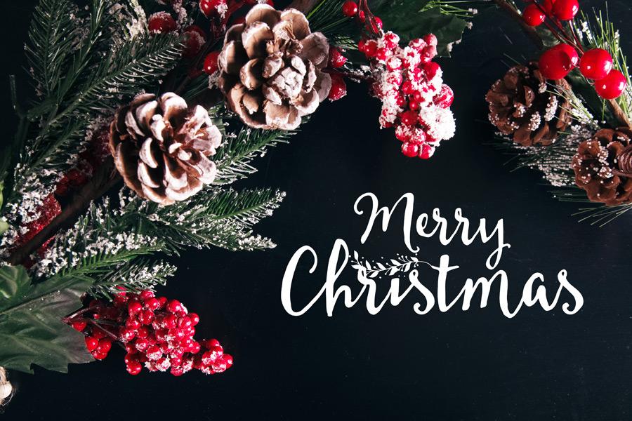 フリー写真 セイヨウヒイラギと松ぼっくりのクリスマス背景