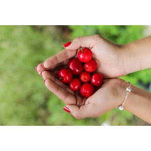 フリー写真, 人体, 手, 食べ物(食料), 果物(フルーツ), さくらんぼ(サクランボ)