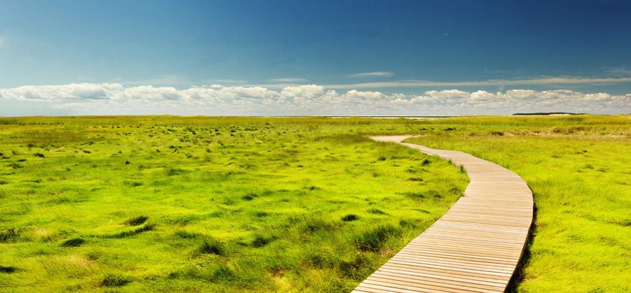 フリー写真 遊歩道と沼地に広がる草の風景