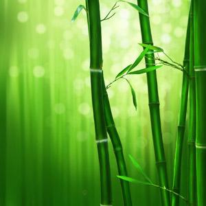 フリーイラスト, 背景, 自然, 竹林, 竹(タケ), 緑色(グリーン), 玉ボケ