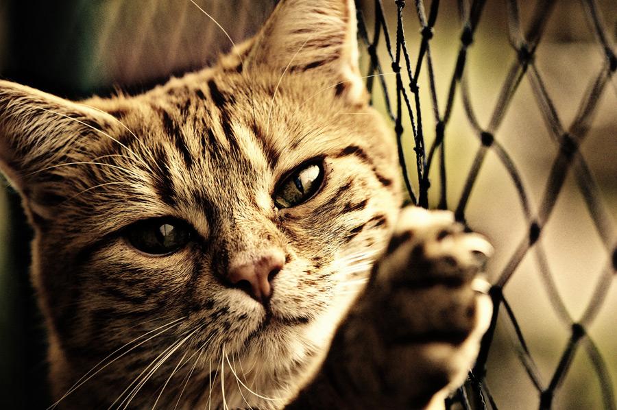 フリー写真 ネットと爪を立てる猫