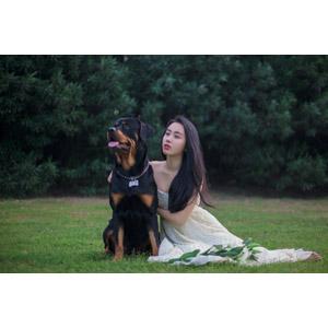 フリー写真, 人物, 女性, アジア人女性, 中国人, ウェディングドレス, 人と動物, 動物, 哺乳類, 犬(イヌ), ロットワイラー, 座る(地面), 女性(00112)