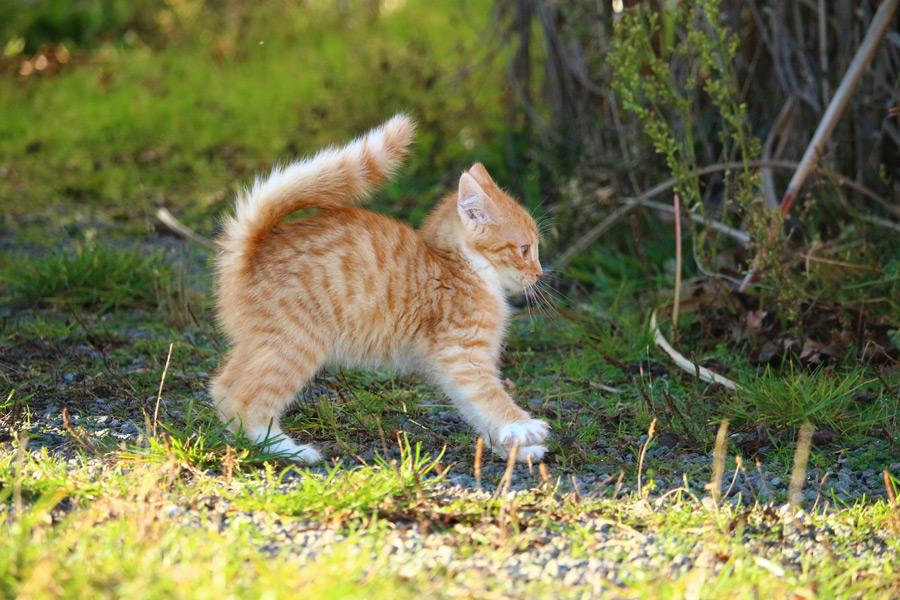 フリー写真 驚いて毛が逆立つ子猫