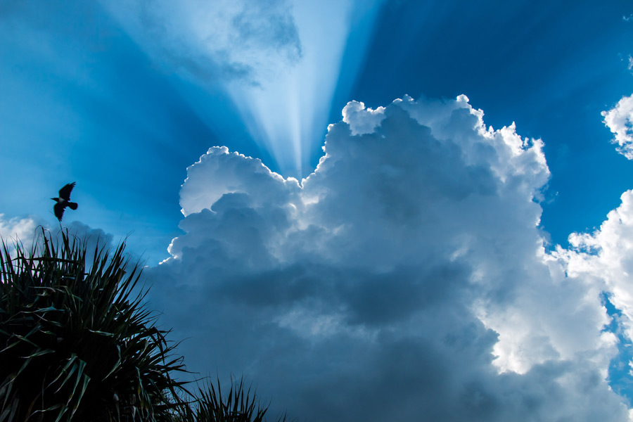 フリー写真 雲と薄明光線と空を飛ぶ鳥の風景