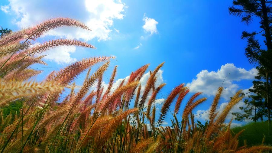 フリー写真 草むらと青空の風景