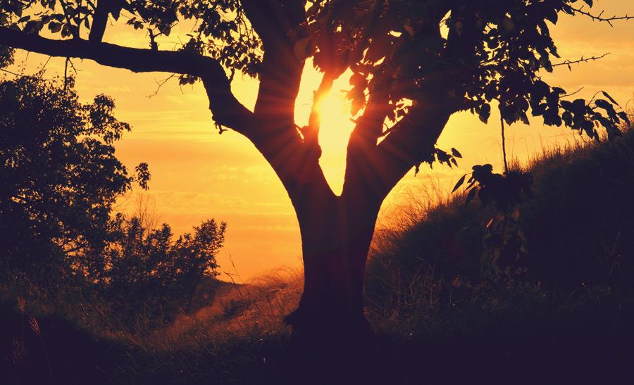 フリー写真 夕日と木の風景