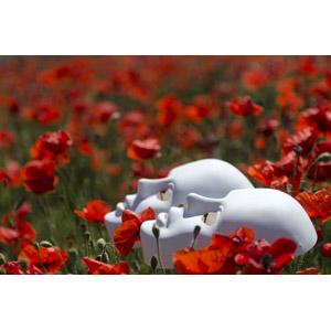 フリー写真, 風景, 植物, 花, ヒナゲシ(ポピー), 赤色の花, 花畑, 仮面(マスク)