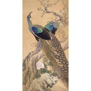 フリー絵画, 今尾景年, 動物画, 動物, 鳥類, 鳥(トリ), 孔雀(クジャク)
