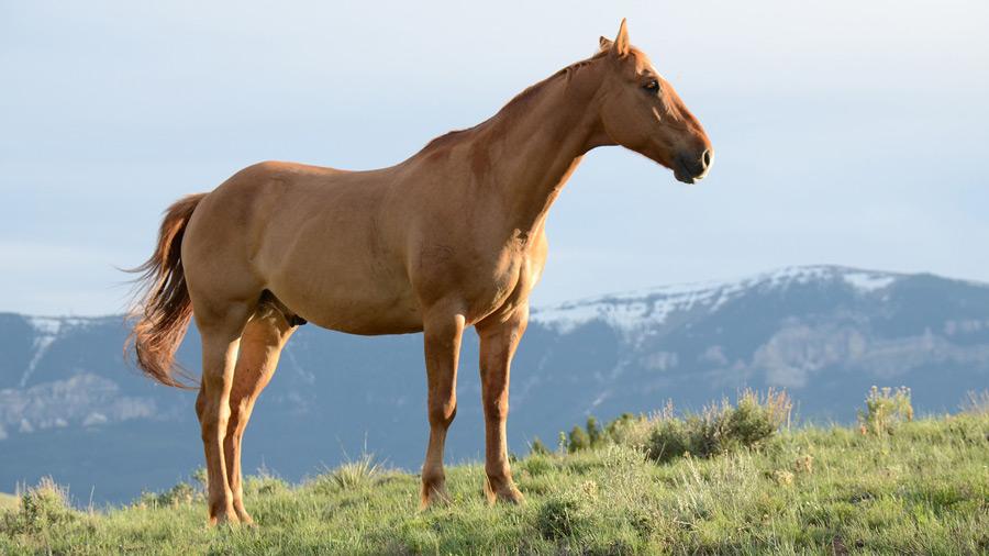 フリー写真 横を向いている一匹の馬