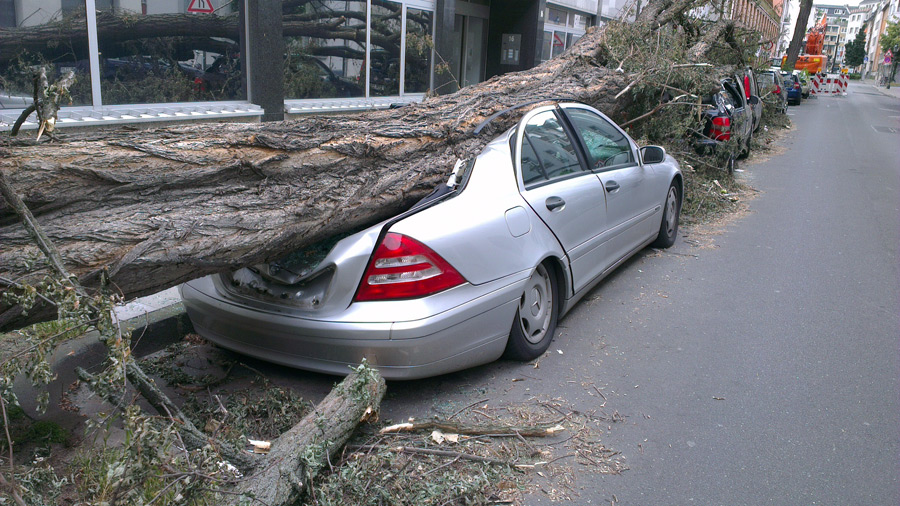 フリー写真 竜巻によって倒木の下敷きになった車