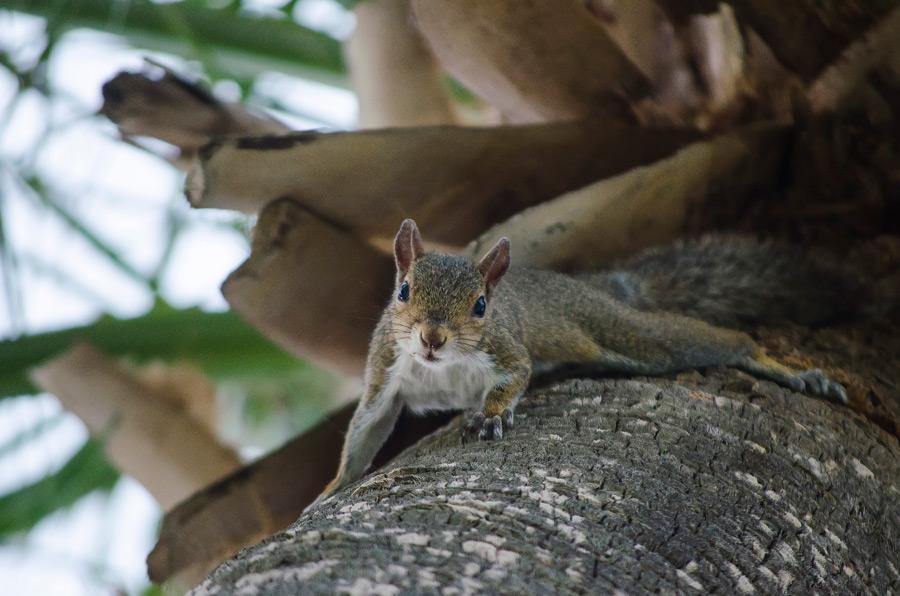 フリー写真 木の上から見ているリス