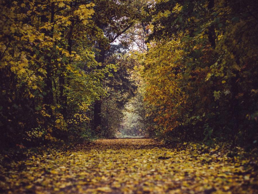 フリー写真 黄葉した森の道