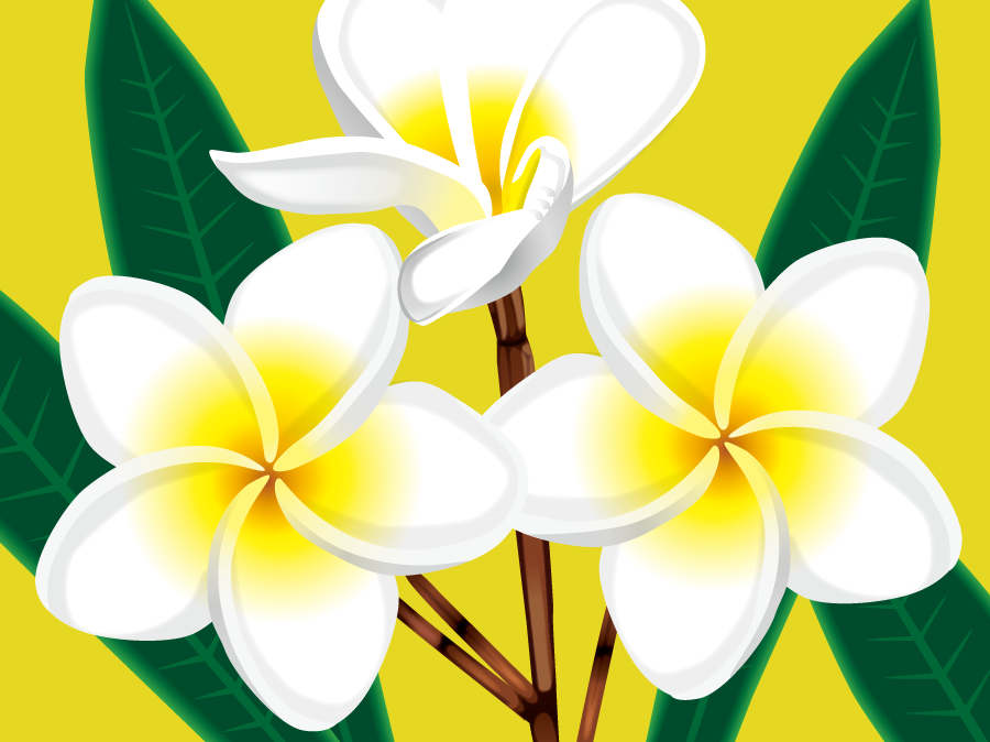 フリーイラスト プルメリアの花