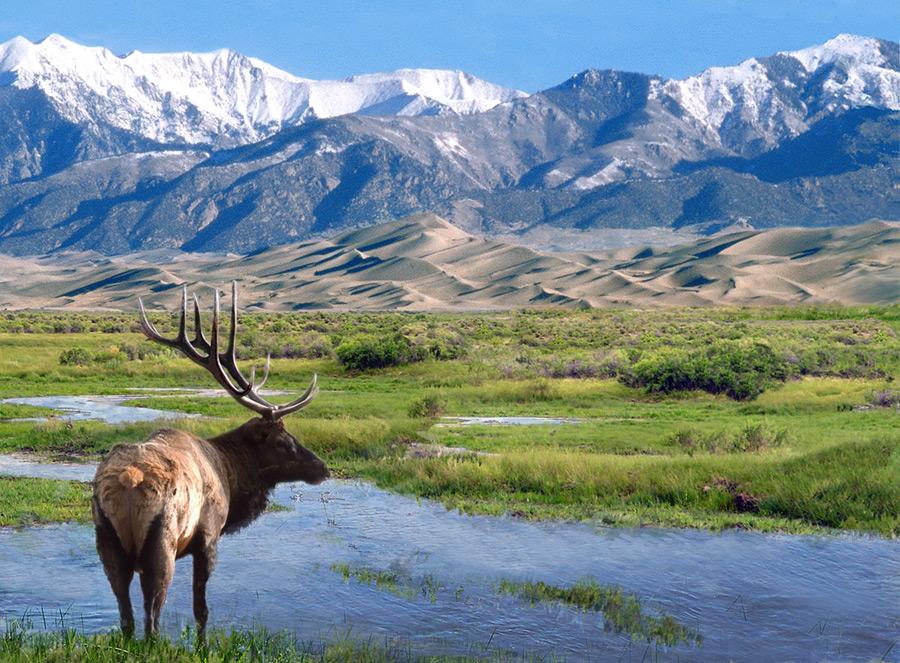 フリー写真 アメリカアカシカとグレートサンドデューンズ国立公園